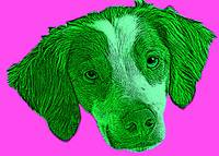 Pop Art of Dog's Head, Pink