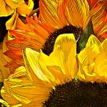 """Sunny Side Up"" by DigiPix"