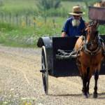"""Amish Work Buggy"" by olsongirl"