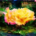 """""""Rose garden"""" by lochithea"""