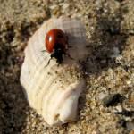 """""""Ladybug Holiday"""" by Gazographer"""