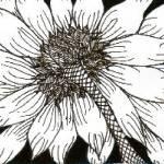 """""""Flower"""" by pamellajo"""
