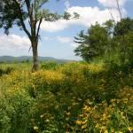 """Sunflower Fields"" by wilclan777"