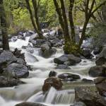 """Bridalveil Creek"" by edleckert"