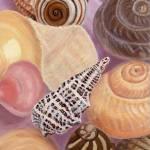 """Sea Shells Still Life"" by jenniferbray"