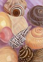Sea Shells Still Life