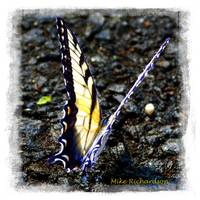 VIVID BUTTERFLY