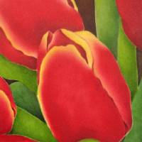 Red Tulips Art Prints & Posters by Terri Meyers