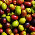 """Olive"" by alowan"