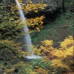 """""""Ponytail Falls"""" by kendietz"""