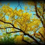 """fall"" by Risforrobo"
