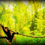 """""""monkey"""" by Risforrobo"""