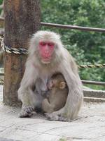 Mother & Baby Monkey