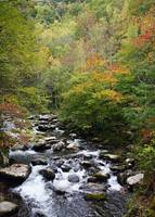 Mountain Stream in the Fall