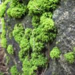 """""""Moss"""" by evoken"""