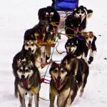 """""""Follow Us To Nome."""" by PerryPullen"""