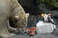Polar Bear Buffet