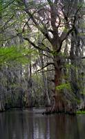Honey Swamp