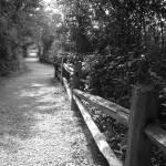 """Long road ahead"" by NDBARP"