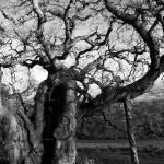 """Giant Tree"" by BerndTschakert"