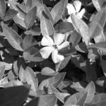 """Little Bloom"" by Ampace"