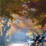 """""""Fall Street Scene"""" by LunarImage"""