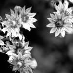 """flower8"" by digitalplains"