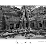 """Ta Prohm"" by sjpettersson"