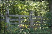 Fence in the woods