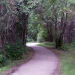 """bike trail - summer"" by DCLWolf"