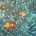 """""""Nemo"""" by Titounet"""