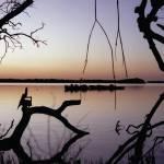 """Mangroves At Sunset"" by BobWood"
