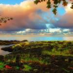 """""""Hawaiian beauty....."""" by Debasis"""