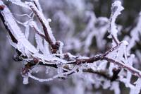 Frost on a branch, Derryloiste