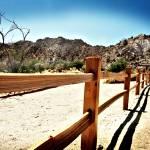 """Desert Lomo"" by JohnWardell"
