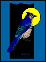 Blue Jay and Full Moon