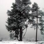 """Fir Tree in Winter"" by 2exposed"