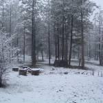 """Snow Woods"" by azvirtual"
