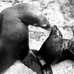 """Seals"" by BenKinder"