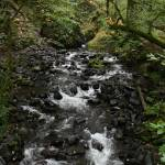 """Oregon stream"" by DavidCombs"
