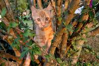 Kitten Tarzana in tree suprise