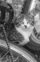 Kitty in Black and White