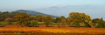 Autumn in the Provence vineyard