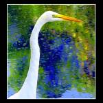"""White Egret5BB"" by glink"