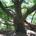 """branches reaching outward"" by artsyfart66"