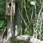 """birdhouse"" by artsyfart66"