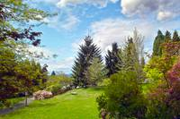 Springtime View from Home, Vancouver BC