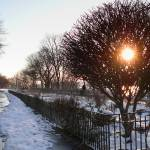 """Winter Garden"" by rogerwhite"