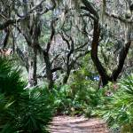 """Cumberland Island Trail"" by Laurel"