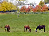 Kentucky Horse Farm c